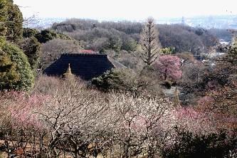 東京スカイツリーの見える見晴台から撮影