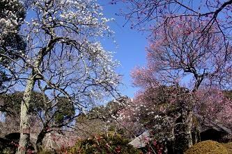 見頃の園内です。