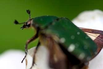 夏も近づき、子供たちが好きな昆虫もたくさん姿を見せ始めました。