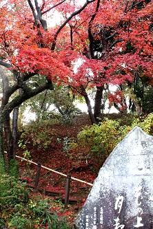 芭蕉句碑と紅葉(心字池のわきにあります)。