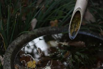 松連庵のつくばい。水の中で落ち葉が揺れています。